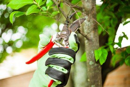 Servicio de jardinería | GrupoSMC
